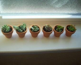 "Mini clay pots planted with   succulent or sedum- 1"" Terra Cotta Clay Pot"