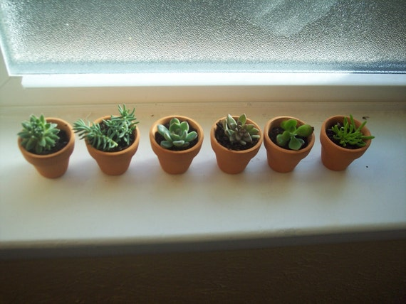 6 mini clay pots planted with succulent or sedum 1 for Small clay pots