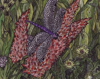 Suburban Splendor: Dragonfly