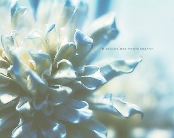 Macro Flower Print, Soft, Macro, Close Up, Nature, Muted Colors, Pastel, Blue, Wall Art, Home Decor, Fine Art Photography, Various Sizes