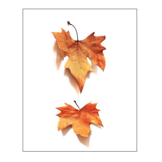 Falling Leaves Wall Decor : Autumn fall leaf wall decor art photography instant