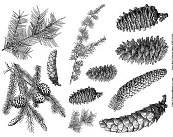 Pine Cones, Pine Needles Line Art Illustrations for Mixed Media, Steampunk Art in both JPEG and PNG files, CS13-195e