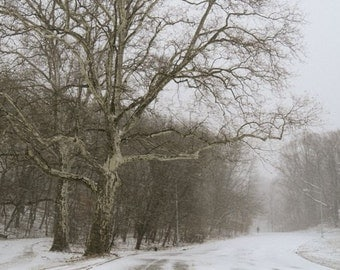 Winter Storm - Winter Landscape - Nature Art - Winter Tone - Snow Scene - New York -  Wall Decor - Woodland - Pale Winter - Misty