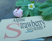 Strawberry Seed Bombs, alpine strawberry seeds, seed paper, plantable paper seeds paper flowers