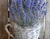 Lavender In Cup Pot -  Lavender Arrangement - Lavender Decoration
