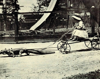 Girl on wagon being pulled by an Alligator Crocodile Photo Print