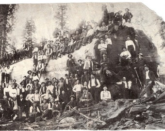 Late 1800's Lumberjacks harvesting a Redwood Tree- California  Photo Print