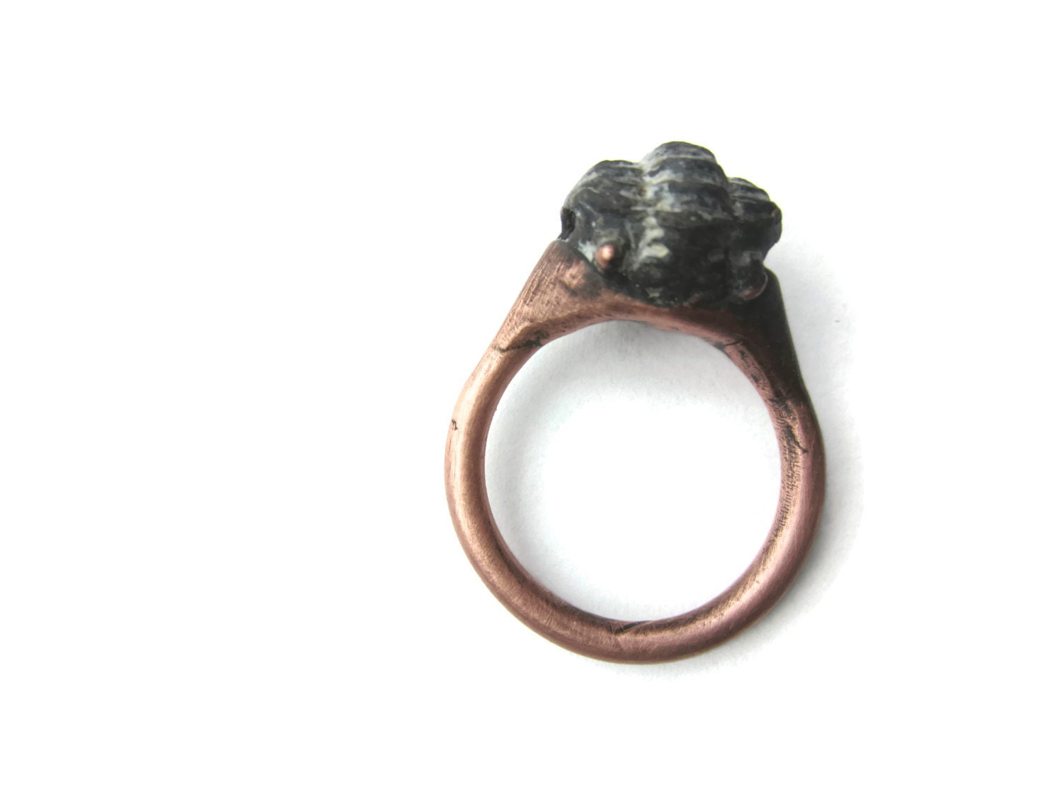 fossil trilobite ring electroformed fossil jewelry by