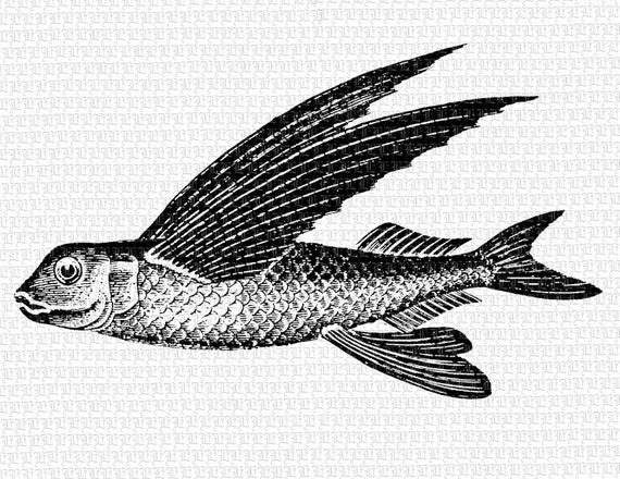Printable Fish Image Flying 300dpi Fish Graphic Vintage Clip Art Fish ...