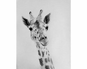 Giraffe, Original Graphite Drawing