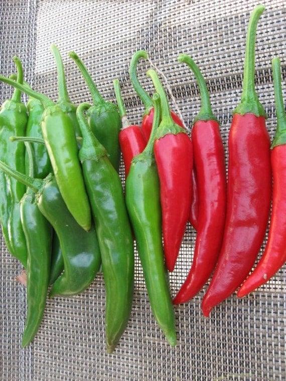 Korean Hot Pepper GOCHU Great by CaribbeanGarden on Etsy
