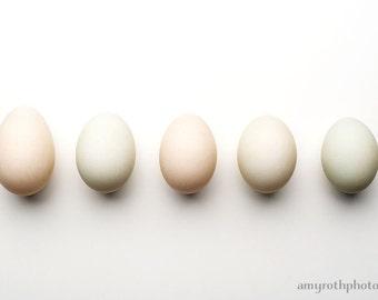Duck Eggs Still Life, Food Photography, Photo Print, Oversized Art, Dining Room Decor, Kitchen Decor, Home Decor, Restaurant Decor