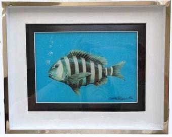 sheepshead fish painting on blue