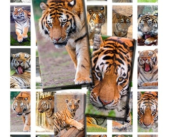 Tiger Big Cat Stripe Wild Zoo Animal Digital Images Collage Sheet 1x2 inch Rectangles Domino Commercial INSTANT Download RD46