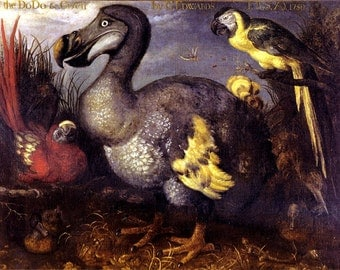 """11x14"""" Cotton Canvas Print, George Edwards, Picture of the Dodo, 1620, Naturalist, Bird, Wild Life"""