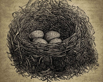 Vintage Animals bird eggs chick nest Digital Canvas Collage Sheet Download Fabric Illustration Picture Art