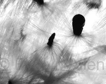 """Black-and-White Milkweed and Petunia ~ Pair of nature photo note cards or 4"""" x 6"""" prints"""