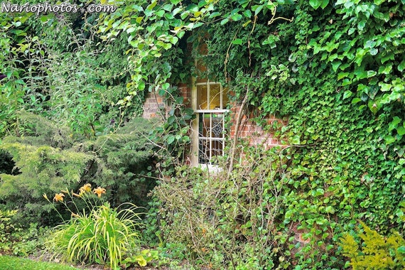 Items similar to english countryside ivy covered wall for English garden wall mural