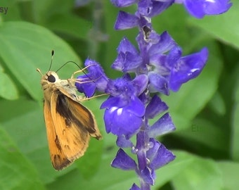 Digital Download, Nature Photography, Moth Photo, Orange Moth, Flowers, Spring, Moth Picture