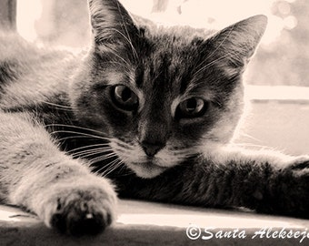 Cat - Fine Art Photography - photography print 8x12, cat photo print, cat photography, black and white cat photo, monochrome, pet photo