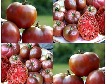 CHEROKEE PURPLE Tomato Seeds - Heirloom Brick Rose Color Tomato ~ Rich Flavor Tomatoes - 80 DAYS
