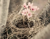 Nest in Spring Tree Nature Bathroom Decor Livingroom Decor Rustic Shabby Chic Home Decor Wall Art Fine Art Photography - JustLifePhotography