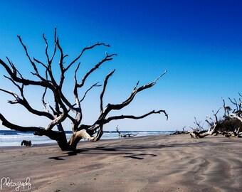 beach photography, ocean photography, Bulls Island, coastal photography, seascapes, ocean, beach
