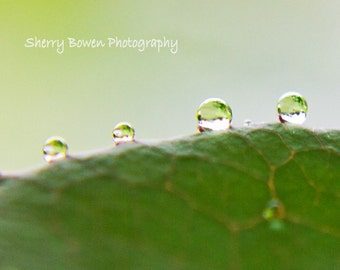 Rain Photography, Rain Drop Photography, Macro Photography, Leaves, Nature Photography, Fine Art Photography, Home Decor, Macro