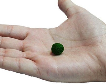 Small Genuine Marimo Moss Ball - Farm Raised