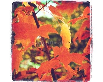 Bright pretty colours nature photography, vintage feel: red orange leaves. Zen art, textured, shabby chic cottage decor, gently aged look.