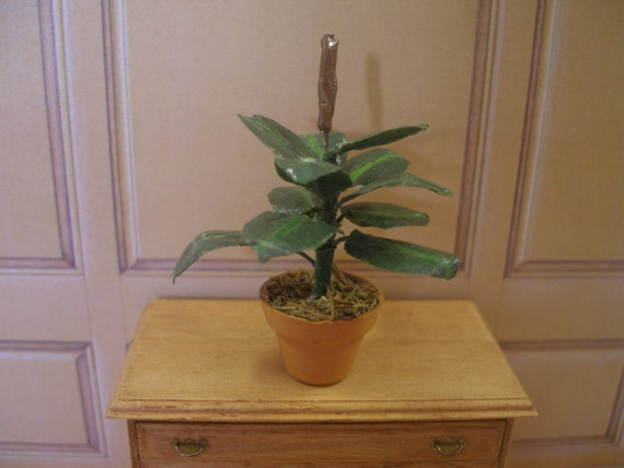 Mini Rubber Plant : Items similar to delicate dollhouse miniature house plant