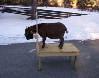 Goat Milking Stand medium