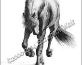 Friesian Stallion Notecards of Pen and Ink drawing, Six Pack