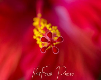Photo Print, Yellow and Pink Flower Photograph, Art Photograph, Macro Photography,  Home Decor, Nature Photo, Floral Photography Print