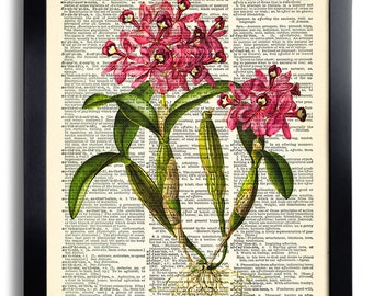 Flower Flowers Art Print Vintage Book Print Recycled Vintage Dictionary Page Collage Repurposed Book Upcycled Dictionary 083