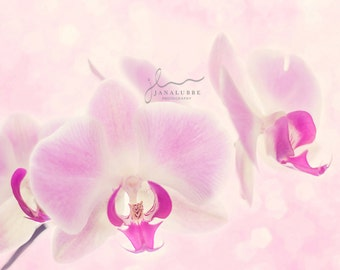 Dreamy Pink Orchid