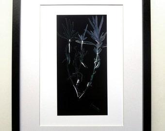 Lavender - Negative (fine art print of a Lavender plant).