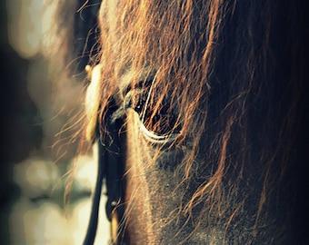 Horse, Handmade Greeting Card, Blank  Inside, Fine Art Photography, 5x7 card 4x6 photo, Home Decor, Brown Horse