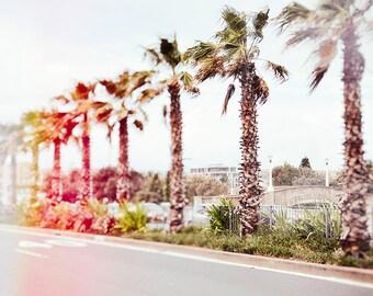 Beach Photography - Bondi - Bondi Beach - Australia - Palm trees - Sun flare - Summer - Retro
