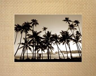 Waikiki Palms - Waikiki, Oahu, Hawaii