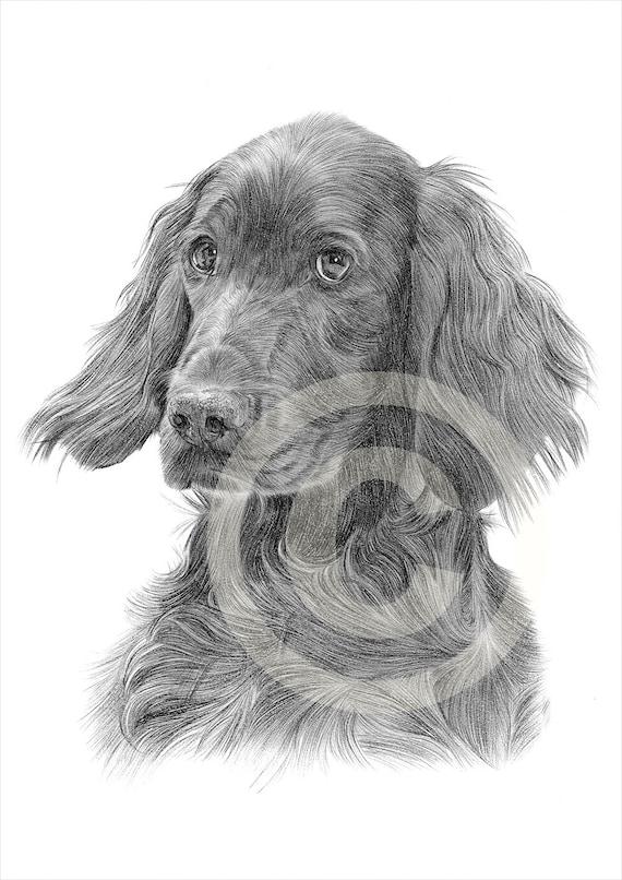 Matita di setter irlandese cane disegno opera di formato a4 for Cane setter