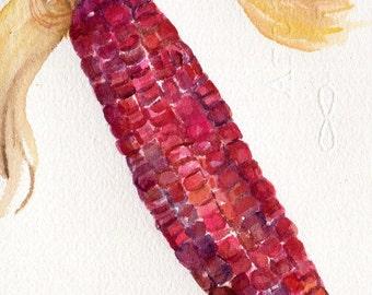 Indian Corn watercolors paintings original, vegetable kitchen decor, 5 x 7 Red Corn Illustration,  SharonFosterArt Farmhouse decor