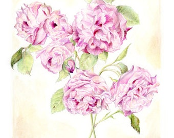 Popular items for fleur rose dessin on etsy - Dessin de rosier ...