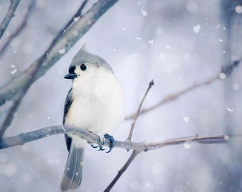 Winter Wall Art, Winter Photo, Winter Art, Bird Print, Woodland Animal Art Print, Bird Photograph, Tufted Titmouse in Snow No. 9