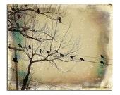 Crows Photo, Gathering, Corvidae, Ravens On Wires, Blackbirds Art, Distressed Art, Goth - The Meeting