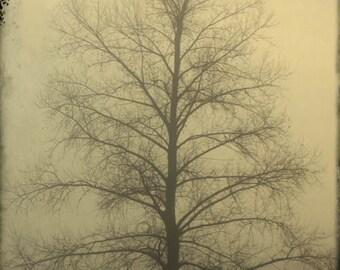 landscape photography fine art photography fog misty print trees woodland home decor