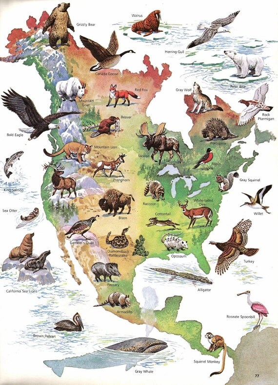 Map north american wild life print vintage children 39 s book for Children s fish book