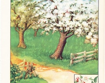 1926 Botany Print - Apple Tree - Vintage Antique Book Art Illustration Nature Natural Science Great for Framing