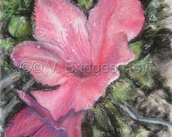 Pink Azalea Flower Power Art, GREAT Home Decor gift, Original Pastel Drawing and Painting in one