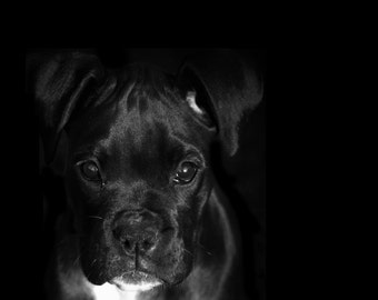 Puppy Eyes - 8x10 Black and White Dog Photography Art Print - Minimal Dog Print Black Background